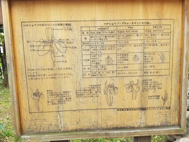 ハナショウブ、アヤメ、カキツバタの違いを紹介するパネル