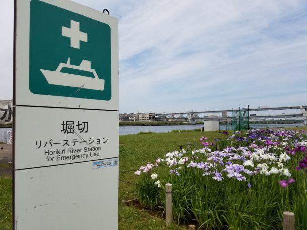堀切リバーステーション。ここにも花菖蒲が咲いています。
