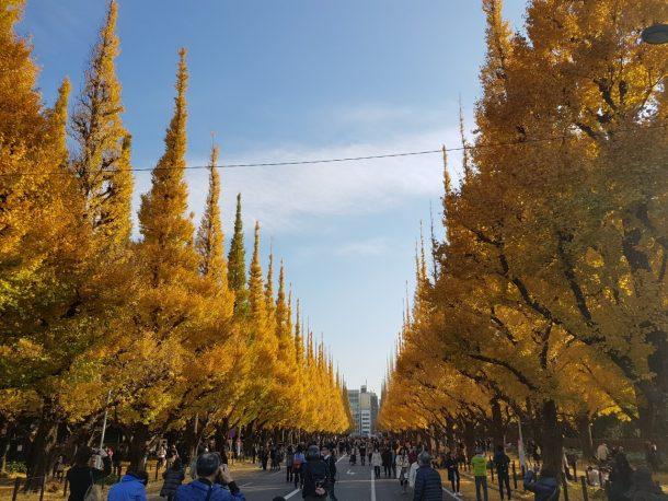 神宮のいちょう並木は平日だというのに大盛況でした
